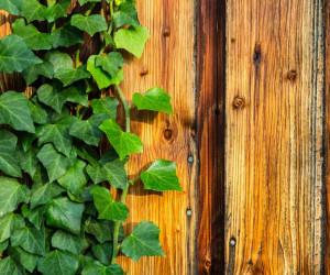 Growth Hacking, modewoord of mindset?